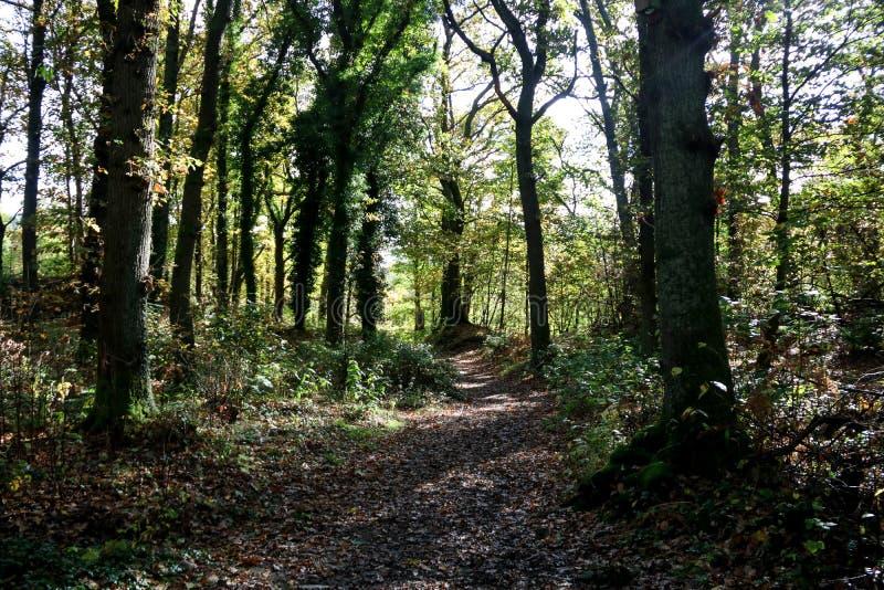 被日光照射了森林地路在苏格兰高地 免版税图库摄影