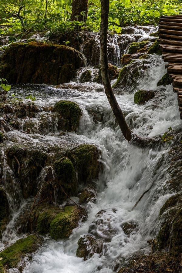 被日光照射了森林瀑布在自然公园在夏天 库存照片
