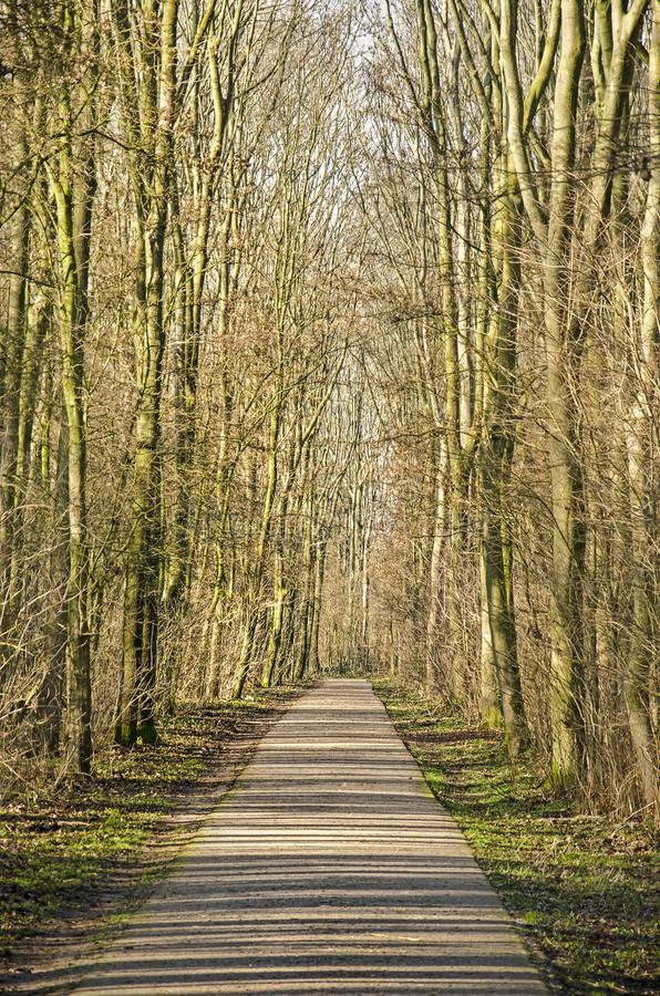 被日光照射了沿途有树的路 免版税库存图片