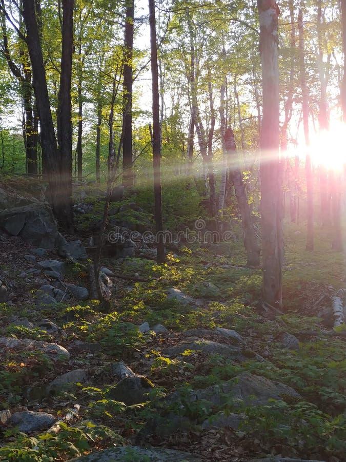 被日光照射了阴影 免版税图库摄影