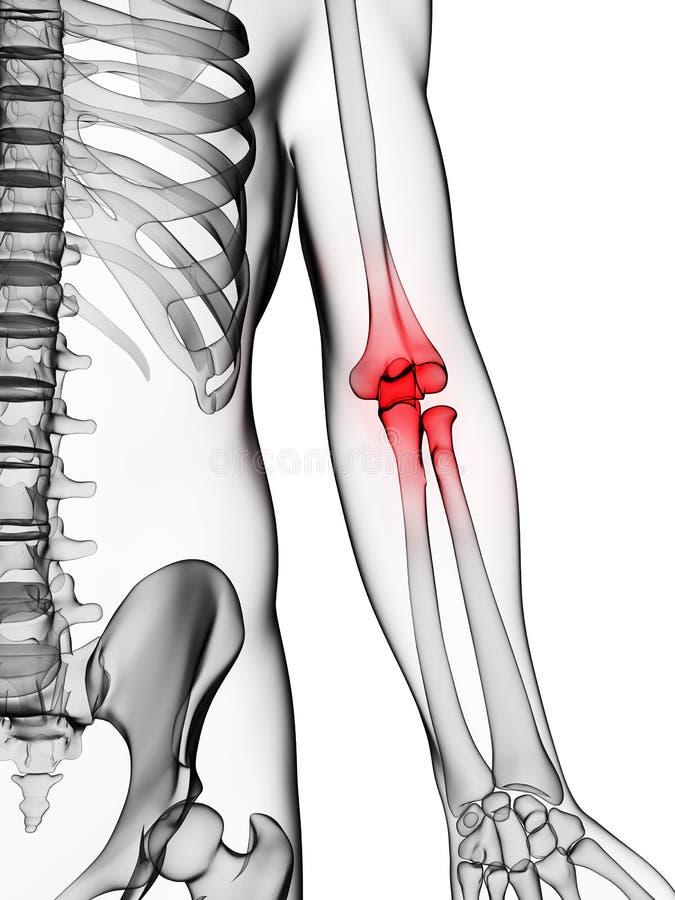 被显示的手肘 向量例证