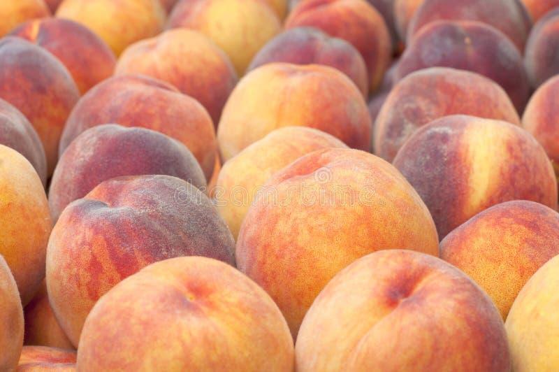 被显示的早期的红色避风港桃子和待售在农夫市场上。增长在Hood河,俄勒冈,美国 免版税图库摄影