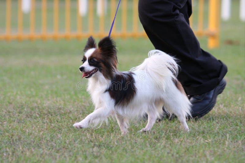 被显示的狗 图库摄影