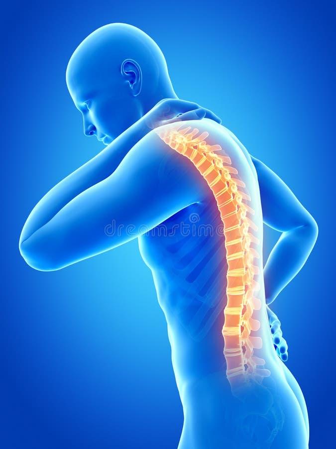 被显示的脊椎 皇族释放例证