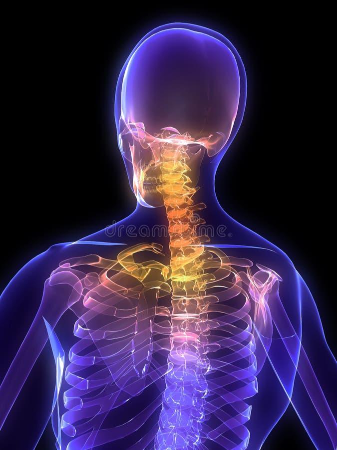 被显示的脖子 向量例证