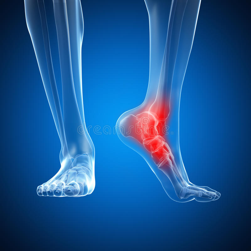 被显示的脚腕 向量例证