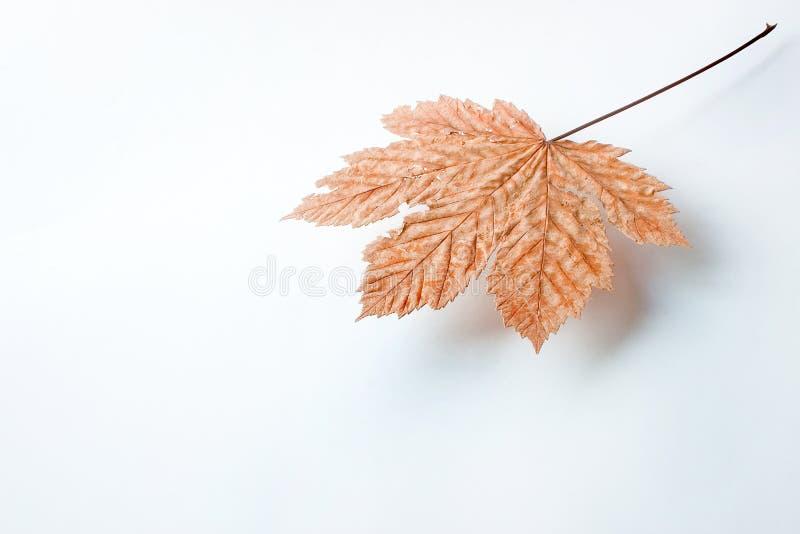被暂停的叶子 图库摄影