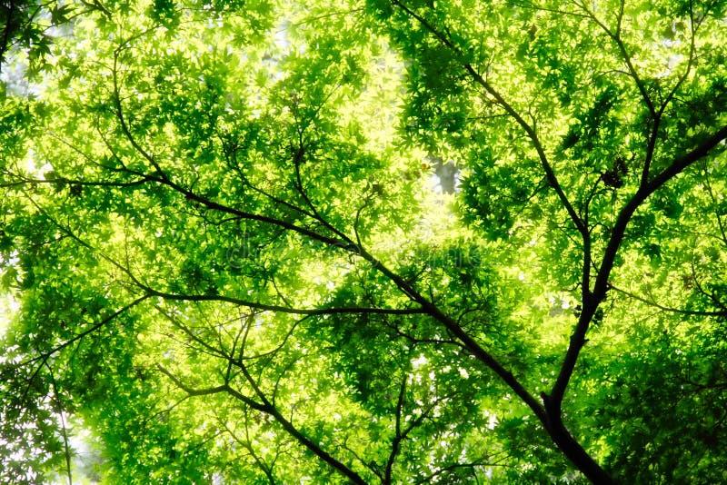 被曝光过度的叶子 免版税图库摄影