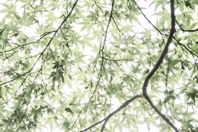被曝光过度的叶子 免版税库存照片