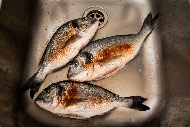 被构筑的和被晒干的新鲜的dorada鱼 库存照片