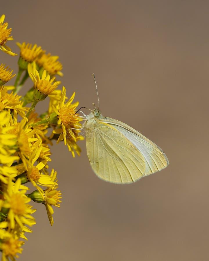 被栖息的蝴蝶在一热的天 库存照片
