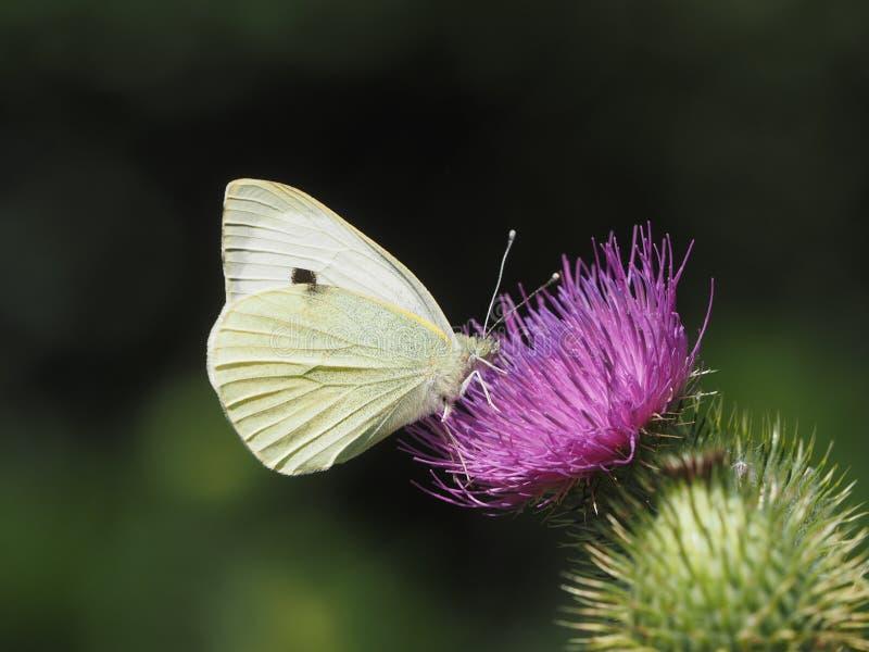 被栖息的蝴蝶在一热的天 库存图片