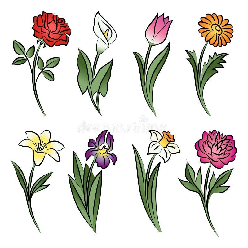 被概述的花的汇集 水芋属,上升了,郁金香,百合,牡丹 向量例证