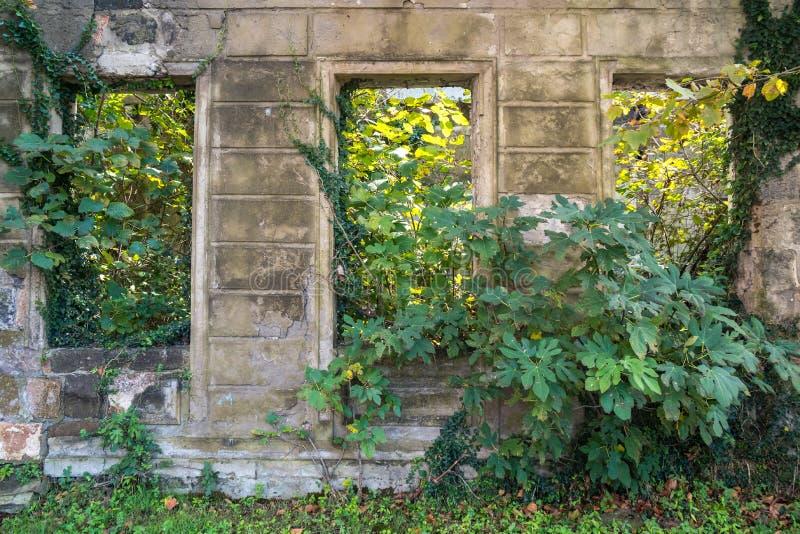 被毁坏的老荒废离开的空的房子特写镜头和狂放 库存照片