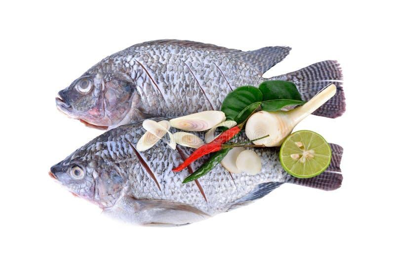 被毁坏的,被称的和被切的尼罗罗非鱼鱼用在白色的草本 免版税库存图片
