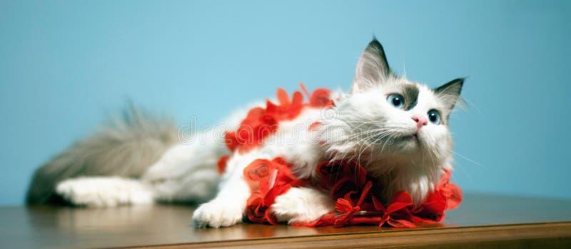 被注视的美丽的蓝色猫 库存照片