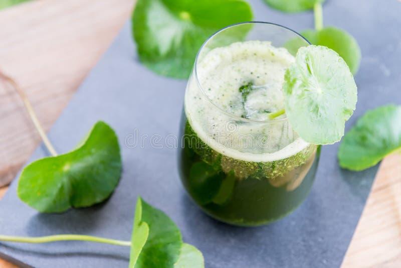 被混和的绿色pennywort,亚洲汁液有绿色背景 库存图片