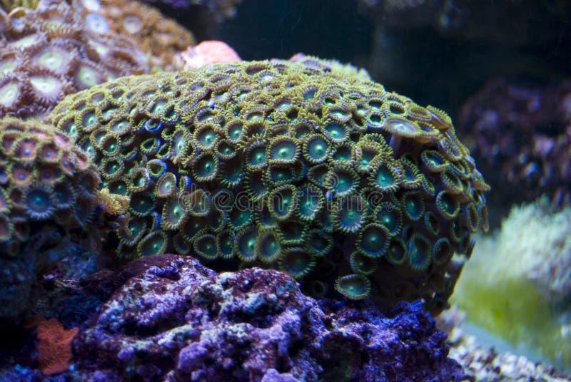 被淹没的珊瑚岩石 库存图片