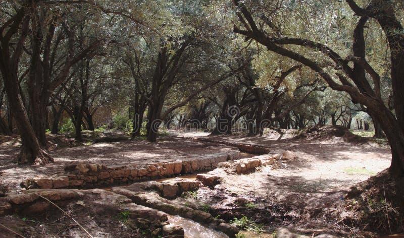 被灌溉的森林 库存照片