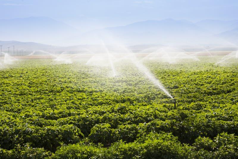 被灌溉的领域 免版税库存图片