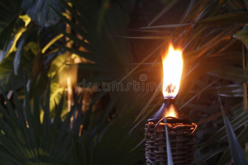 被点燃的火炬在日落的密林 图库摄影