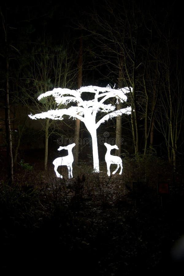 被点燃的结构树森林 免版税库存照片
