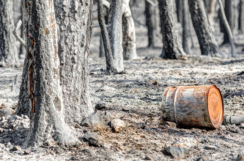 被烧焦的地球和结构树 免版税库存照片