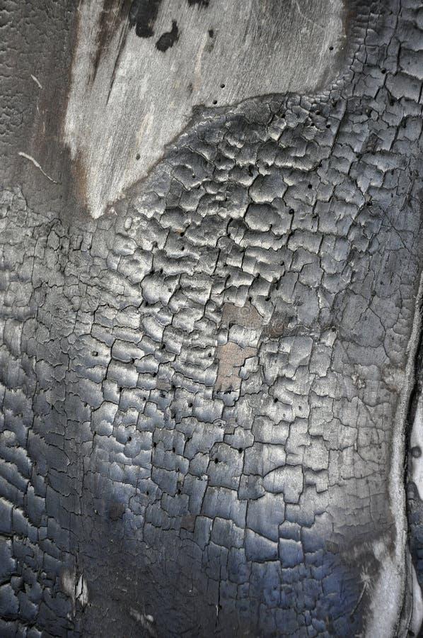 被烧焦的木头纹理。 图库摄影