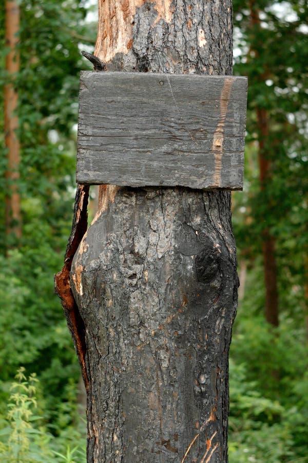 被烧焦的符号结构树 库存图片