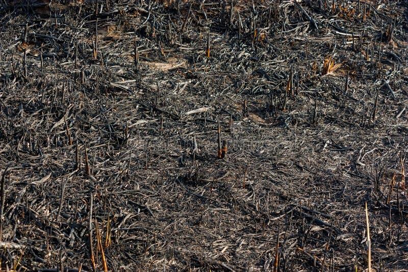 被烧焦的草 库存照片