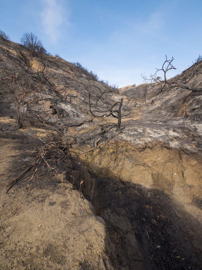 被烧的和被烧焦的山坡在加利福尼亚 库存照片