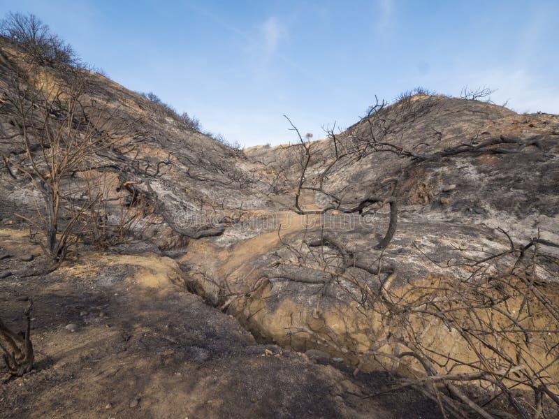 被烧的和被烧焦的山坡在加利福尼亚 免版税库存照片
