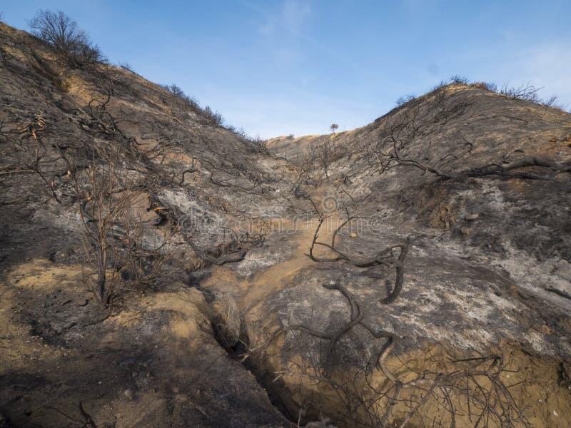 被烧的和被烧焦的山坡在加利福尼亚 库存图片