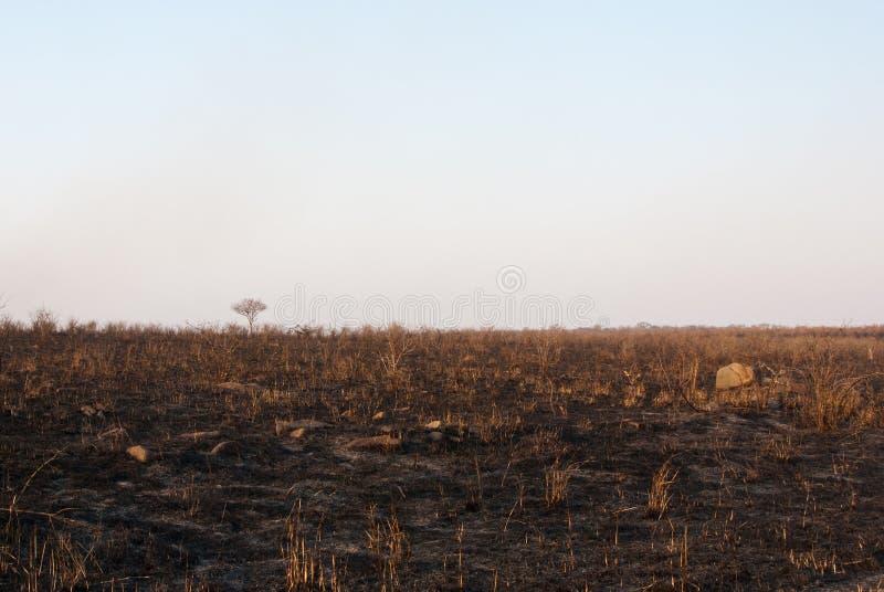 被烧的大草原 免版税图库摄影