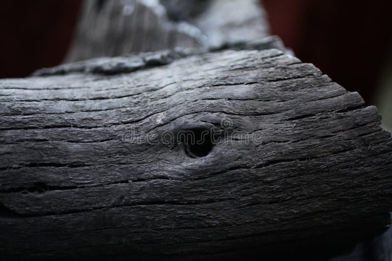 被烧的木头 从火的黑木头 在木头的圆环 ashame 在煤炭烧的木头 免版税图库摄影