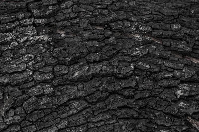 被烧的木纹理背景 灼烧的火造成的概略的黑木表面 由煤炭或木炭做的黑暗的材料 库存图片