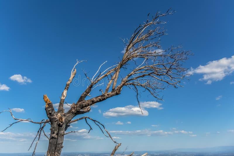 被烧的树看法和打破,火的结果,在Caramulo山顶部 免版税库存图片