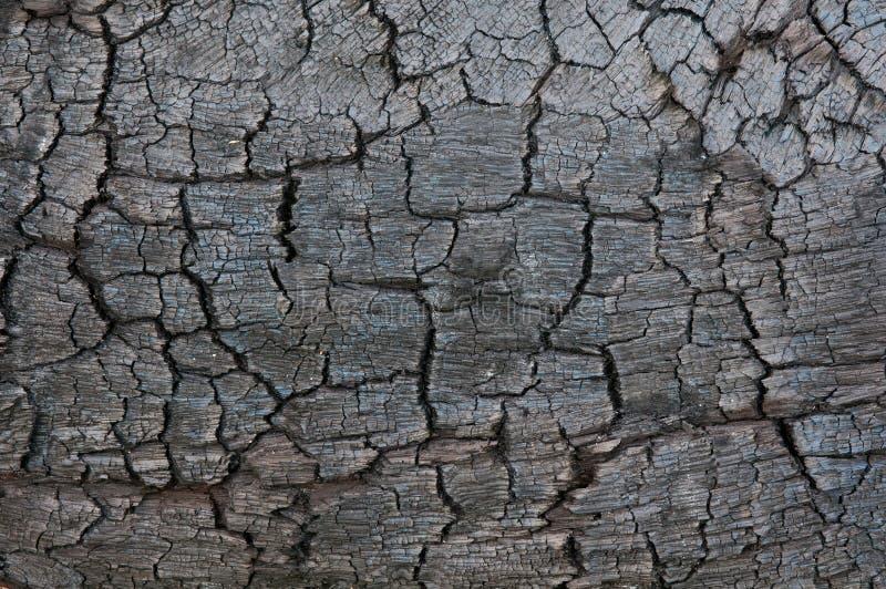 被烧的树纹理在火以后的 免版税库存照片
