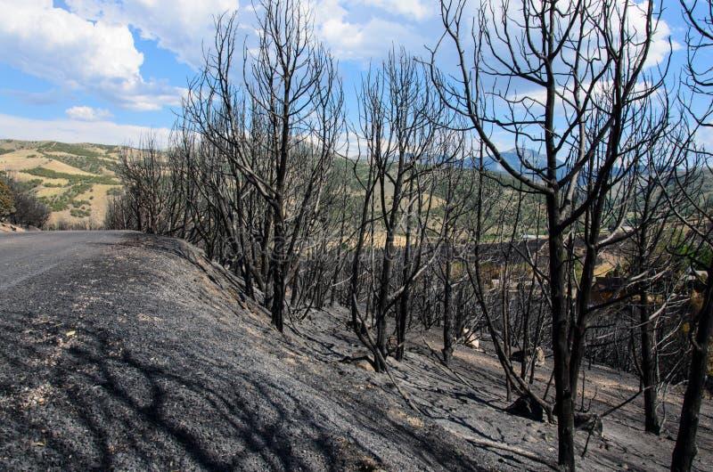 被烧的树 免版税图库摄影