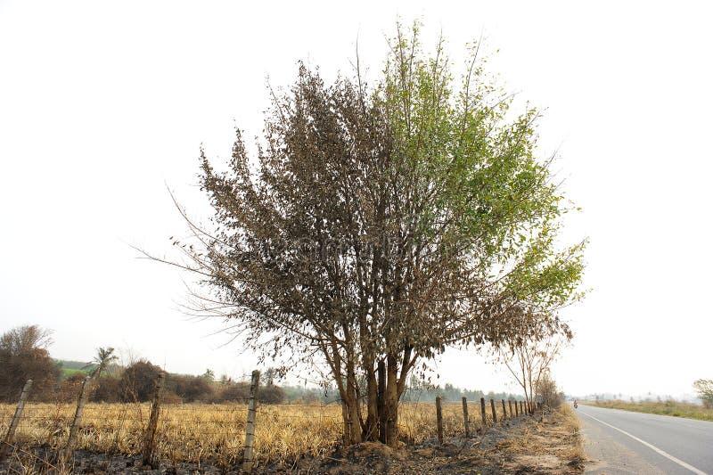 被烧的树 库存图片