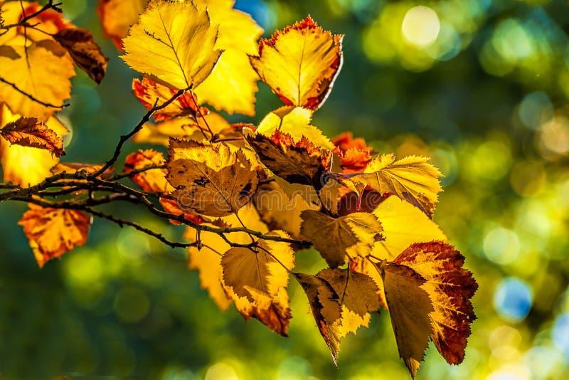 被烧的橙色秋天叶子 免版税库存照片