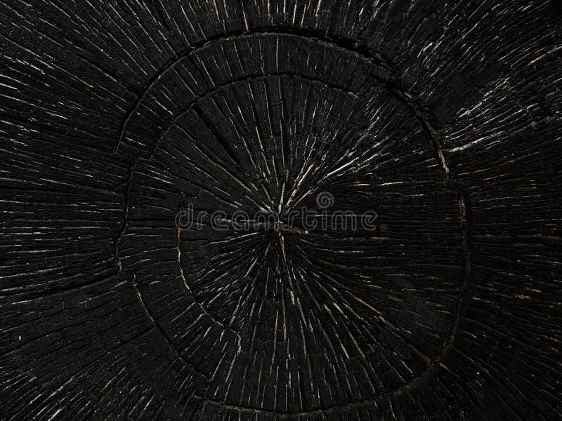 被烧的橡木构造结构树 库存照片