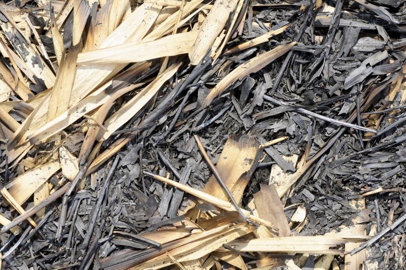 被烧的竹子叶子和词根 库存图片