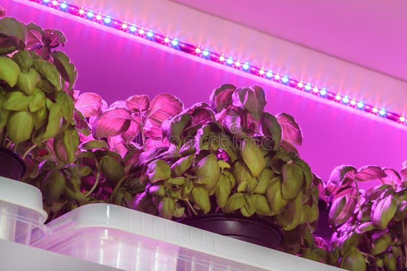 被用于的LED照明设备生长在大商店里面的蓬蒿 库存照片