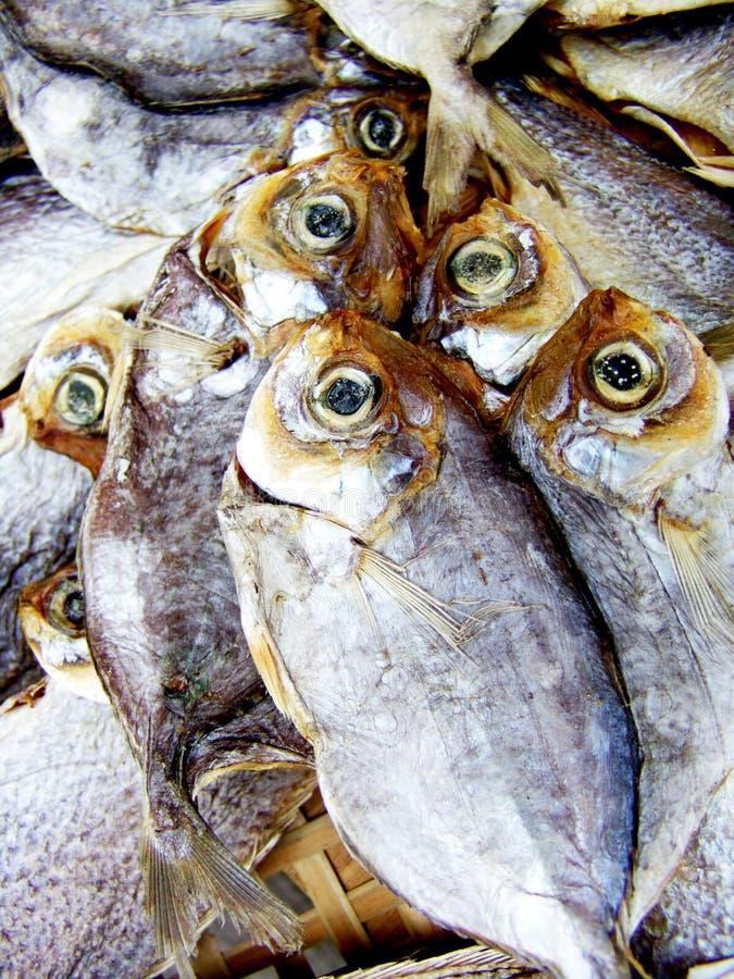 被盐溶的干鱼 免版税图库摄影