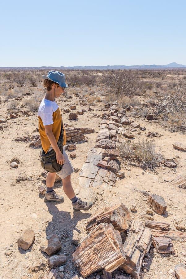 被石化的和矿化的树干 游人在霍里克萨斯的,纳米比亚,非洲著名化石森林国家公园 280 milli 免版税库存图片