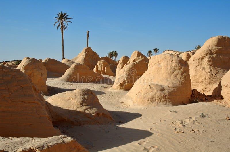被石化的沙丘 免版税库存照片