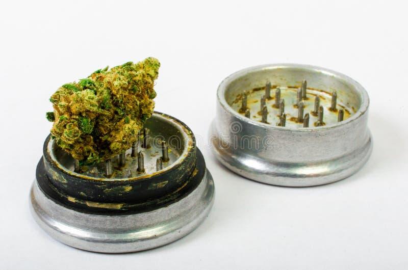 被研的医疗大麻和准备滚动 钢芽钉头切断机 免版税图库摄影
