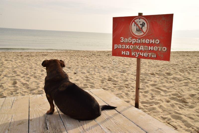 被禁止的狗走 免版税库存图片