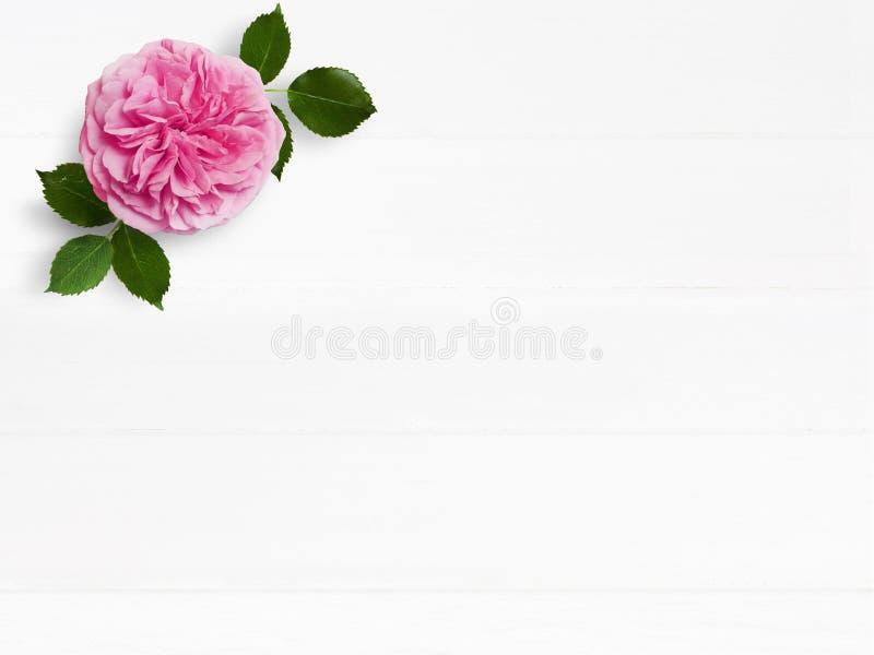 被称呼的储蓄照片 女性与桃红色英国玫瑰色花和空的空间的婚礼桌面大模型 花卉构成 图库摄影